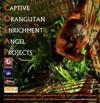 Captive Orangutan Enrichment Angel Projects